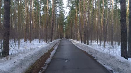 Észtország : Driving on an autumn road in a winter forest at sunset.