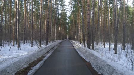 driveway : Driving on an autumn road in a winter forest at sunset.
