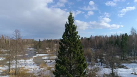 fragilidade : lone pine in winter. Circle around them. Aerial Stock Footage