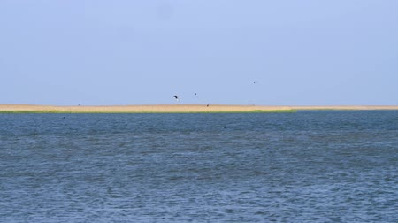 hejno : Birds fly in a flock over water very low, migration Dostupné videozáznamy