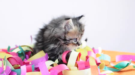 tabby cat : Group of small kittens playing together with paper tinsel Stock Footage
