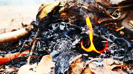 tűzifa : The fire that burns the dry leaves in garden. Stock mozgókép