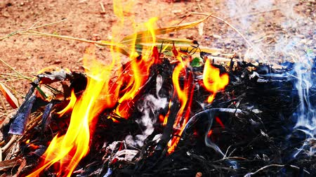 The fire that burns the dry leaves in garden. Stock Footage