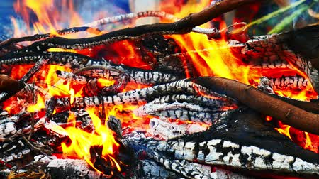 brilhantemente : Close-up of burning fire flame with burnt firewood.