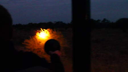 pretoria : CIRCA June 2013 - NELSPRUIT, KRUGER NATIONAL PARK ,SOUTH AFRICA - a boy uses his light to spot some game from the safari truck during the evening Stock Footage