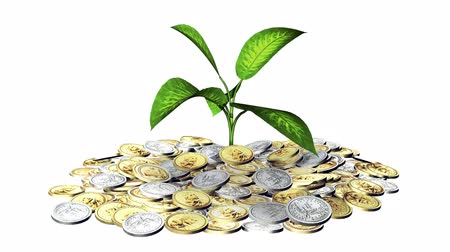 bringing home the bacon : Growing green plant o and a lot of  coins