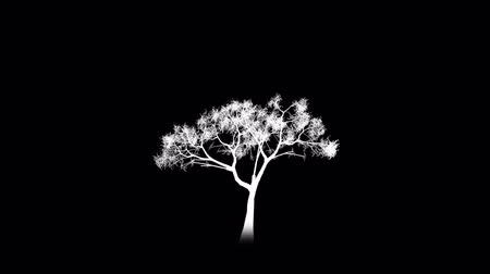 raiz : This clip is the alpha channel for the HD, color version: Growing tree on white.