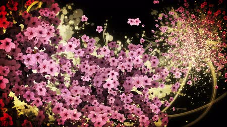 admission : cherry blossom and gold paint strokes black background Stock Footage