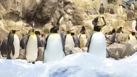 water conservation : The penguin in zoo