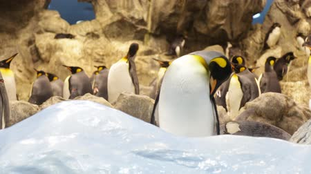 bird family : The penguin in zoo