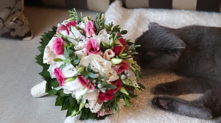 tabby cat : bouquet of pink tulips and white cat