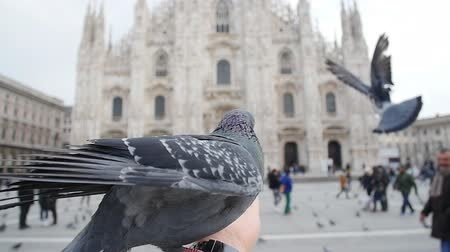 emanuele : Pigeons eating from hands on the background of the Duomo in Milan