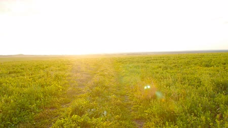 Country Road in the field against the sunset