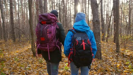 carpathian : A couple hikers Hiking with backpacks in autumn forest . Concept of active rest