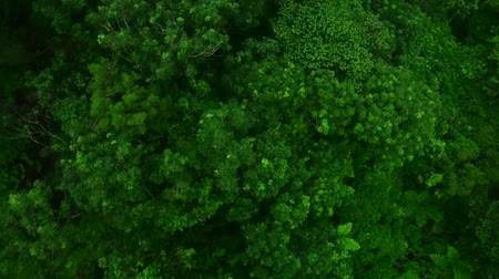 Ангкор : bird eye view of tropical forest