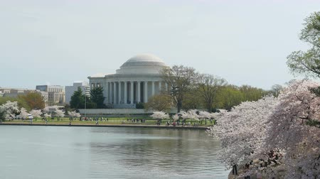 veranstaltung : WASHINGTON - 13. APRIL: Massen von Touristen genießen die Kirschblüten um das Jefferson Memorial und Tidal Basin während der National Cherry Blossom Festival am 13. April 2015 in Washington.