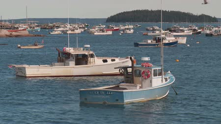 омар : STONINGTON, ME - OCTOBER 6: Lobster boats sit at anchor in Stonington harbor on October 6, 2013 in Stonington, Maine.