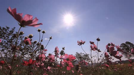 луг : Flowers blowing in the wind with blue sky in sunny day