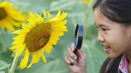 napraforgó : Happy Asian girl looking sunflower with magnifying glass