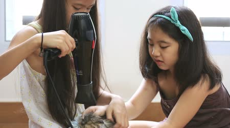 korejština : Little Asian girls drying Persian kitten in towel after washing
