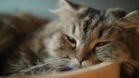 ébredés : 4K Cute tabby cat sleeping with sweet dream at home