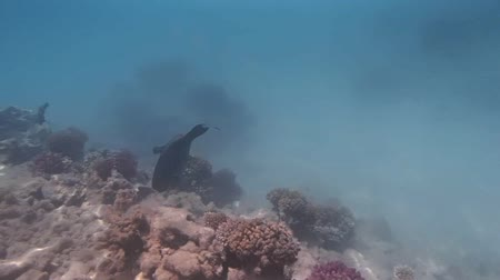 underwater landscape : snorkeling in the red sea