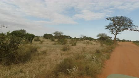 câmara : Game drive in the savanna landscape of kenya Stock Footage