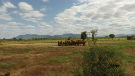 câmara : wild living elephants in the savannah landscape of kenya