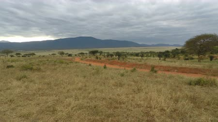 savana : savannah landscape in kenya after raining season