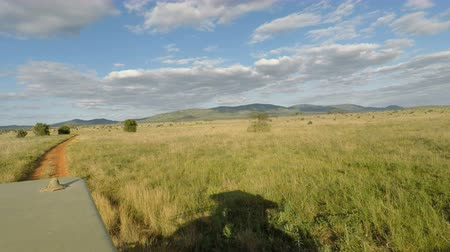 massai : Safari durch Savanna in Kenia Videos
