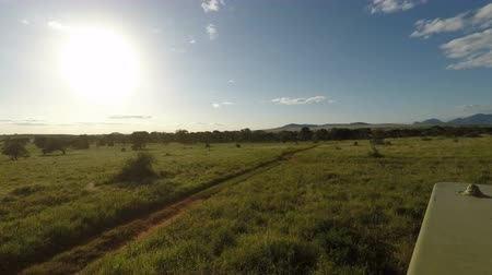 câmara : Game Drive Through Savanna in Kenya Stock Footage