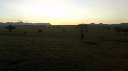 kenia : sunrise over savanna in kenya