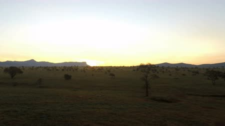 savanna : sunrise over savanna in kenya