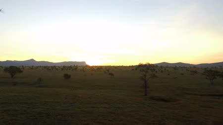câmara : sunrise over savanna in kenya