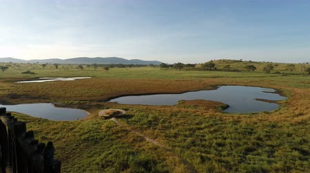 massai : Wasserloch in Kenias Savanne am Morgen Videos