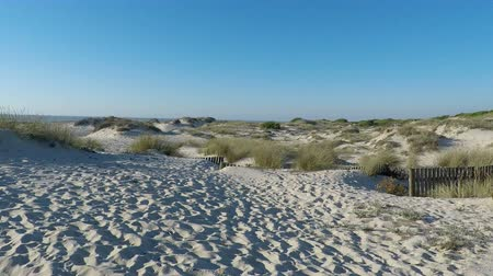kumul : afternoon at sand dunes of sao jacinto beach in portugal Stok Video