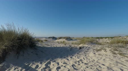 Коста : afternoon at sand dunes of sao jacinto beach in portugal Стоковые видеозаписи