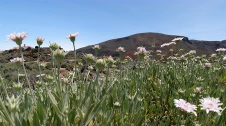 idil : Scenic volcanic landscape at teide volcano on tenerife island Stok Video