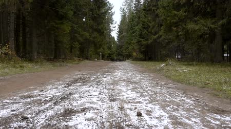 borowina : Video of forest walking