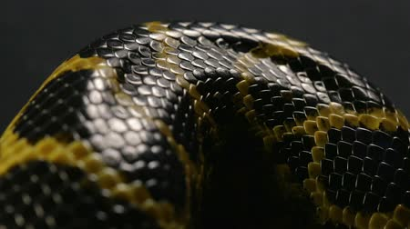 creeping : Close up shooting of snakeskin