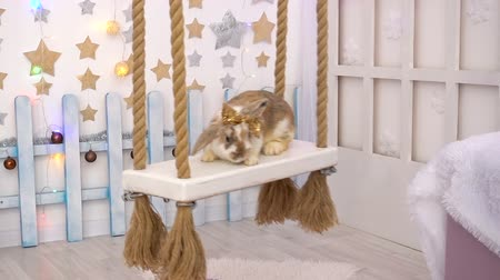 бежевый : Video of fluffy beige bunny on a seesaw