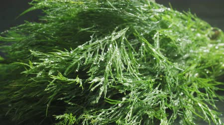 fennel : Video of green dill with water drops