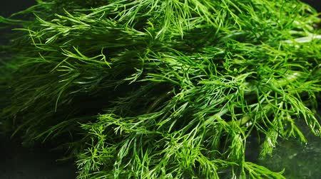 fennel : Video of falling green wet bunch of fennel Stock Footage
