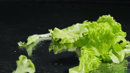 saŁata : Video of falling wet green leaves of salad Wideo