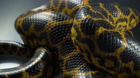 respiração : Closeup video of breathing yellow boa anaconda