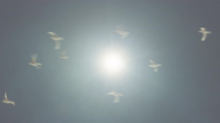 птица : Birds Flying Against the Sun Loop