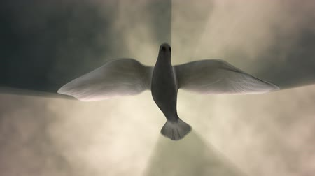 duch Święty : White Dove Descending Among Light Rays