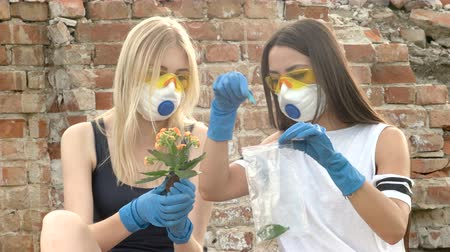 aftermath : Women tears off the petals and flowers from the plant and puts it in a packaging