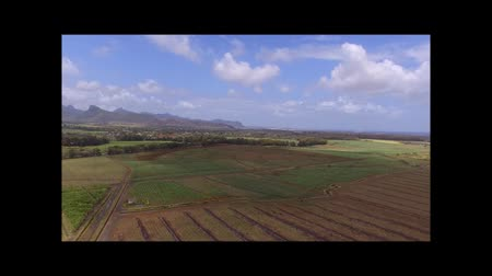 slash and burn : Sugar cane field Mauritius
