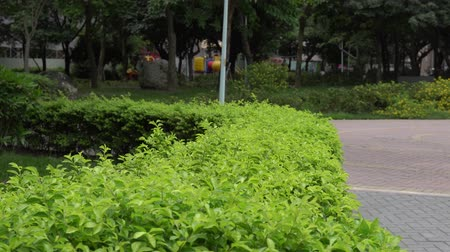 The view of the park . Green plants in the garden. Stock mozgókép